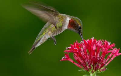 3 Ways to Prepare Your Yard for Hummingbirds