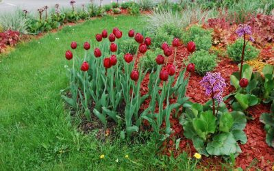 Add Winter Color to Your Landscape With These Perennials
